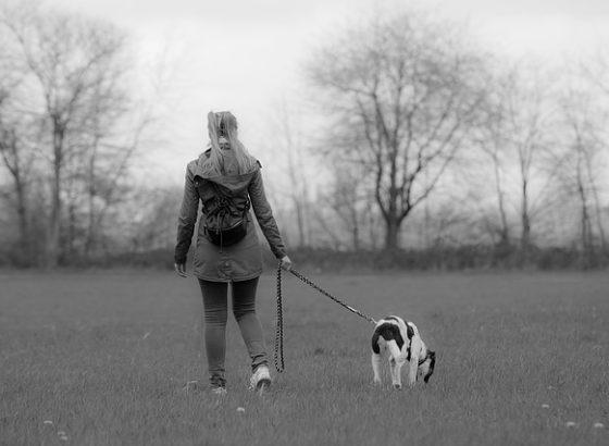 portare a spasso il cane fa bene alla salute
